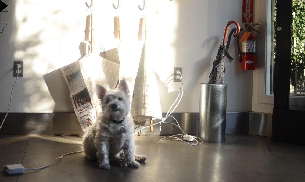 dog-reveille